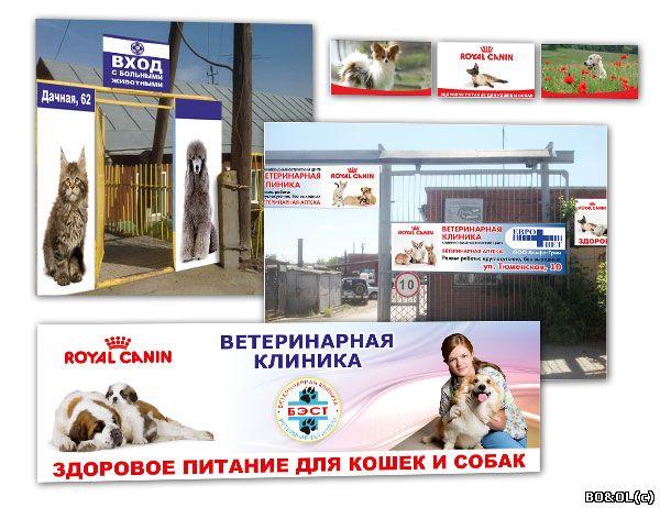 Про план для стерилизованных кошек в Украине. Сравнить